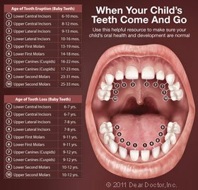 Your Child'sFirst Teeth